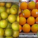 Cam lạ gắn mắc Cam Vinh trên thị trường