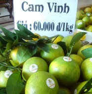 Giá cam Vinh trên thị trường