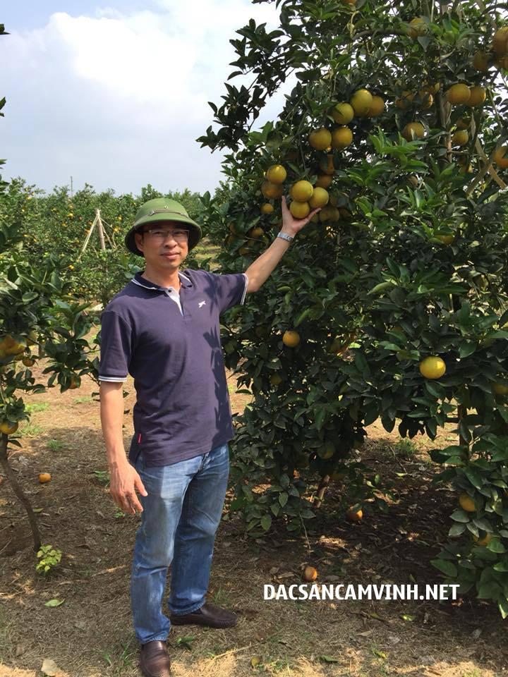 Giá cam vinh tại vườn hạ nhiệt