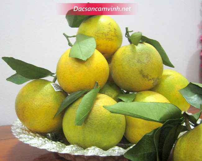 Những trái cam đẹp thích hợp để thăm biếu